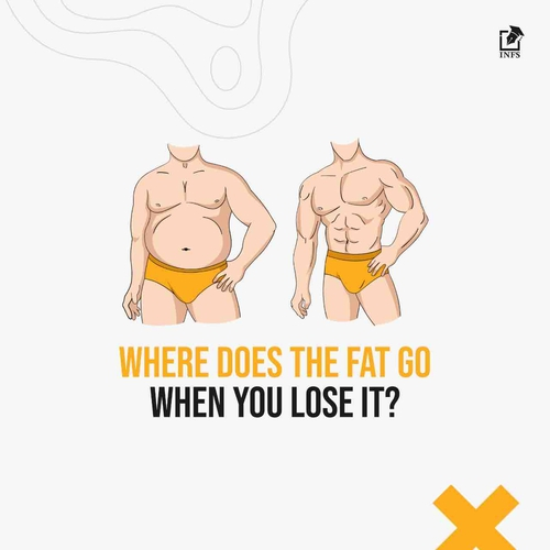 Where Does The Fat Go When You Lose It?