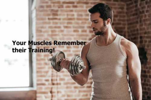 Muscle memory: Can muscles recall training habits?
