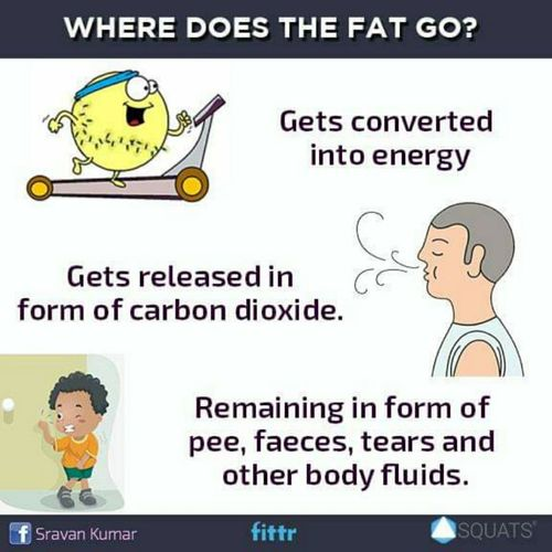 Where does the fat go?