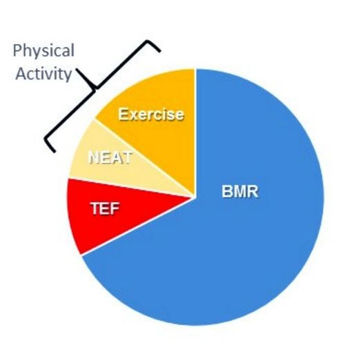 BMR and TDEE - Why they are misleading you!