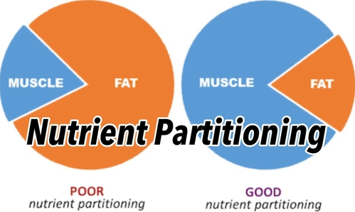 Nutrient Partitioning - The role of body fat % !