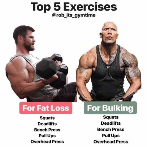 What Exercises Should You Do To Burn Fat?
