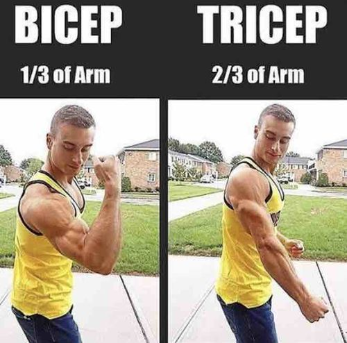 Your triceps are 2/3 of your arms!