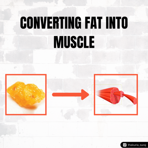 Converting Fat into Muscle