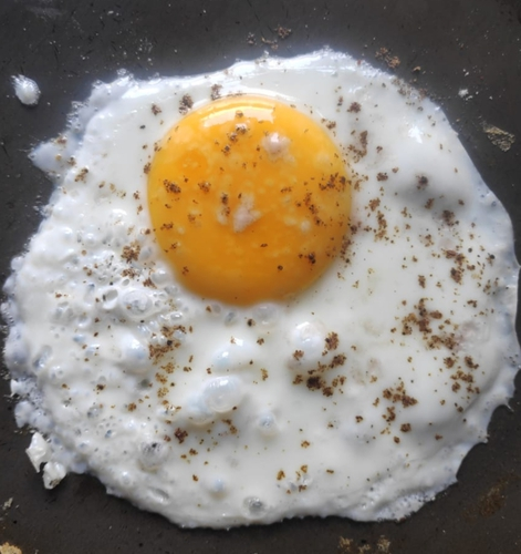 Egg (half fried egg)